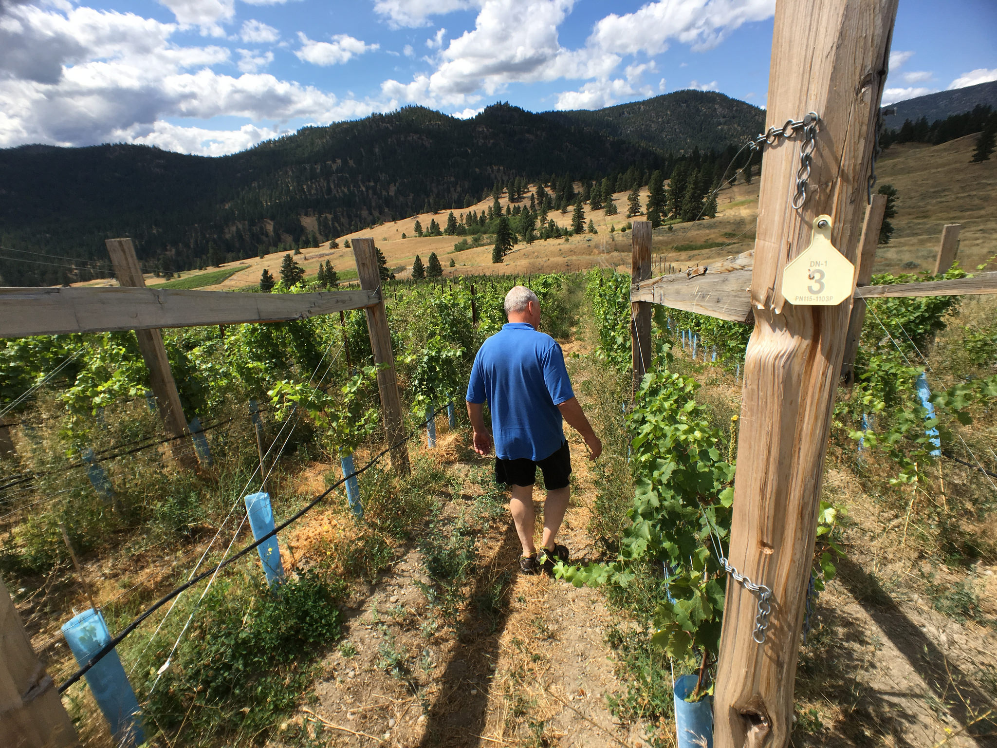 Steve Lornie in Garnet Valley vineyard